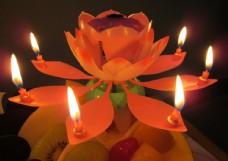 莲花灯图片