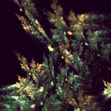 树叶抽象艺术