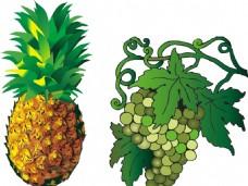 葡萄 菠蘿