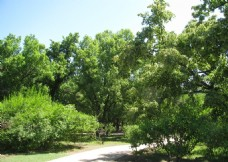 植物园美景