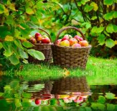 篮子里的苹果图片