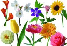 各種花精選